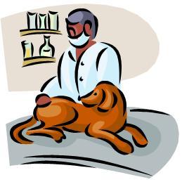 perro-en-veterinario